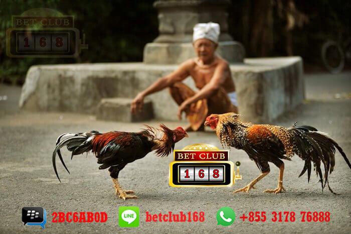 Agen Sabung Ayam Online Bonus Besar Deposit 50 Ribu Termurah