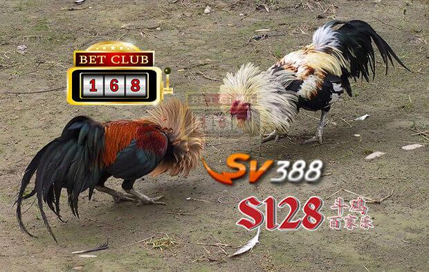 Keuntungan Bermain Judi Adu Ayam Online Indonesia